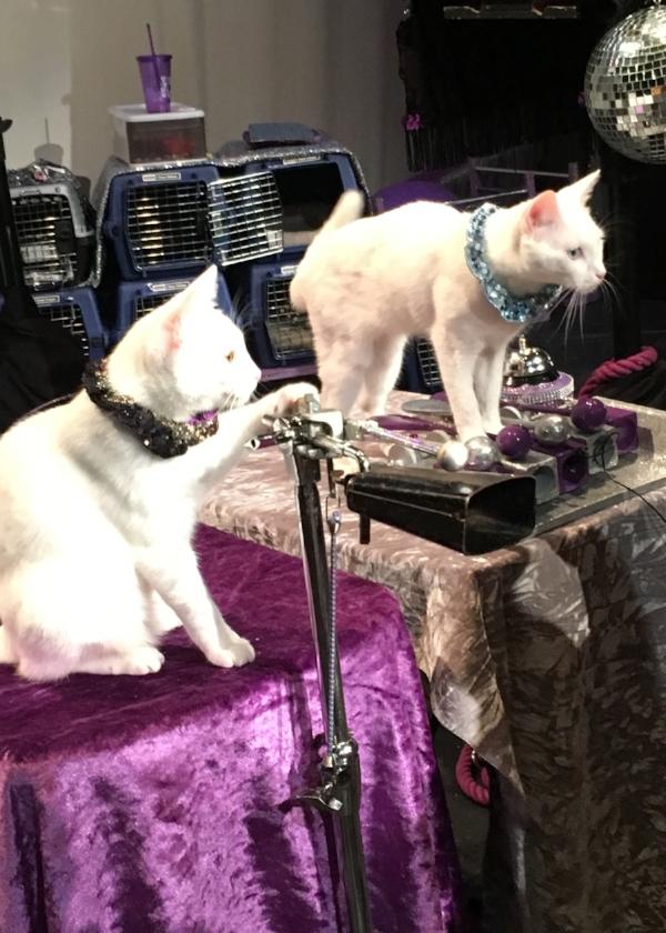 Acro Cats