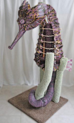 sq-paws-seahorse-001A