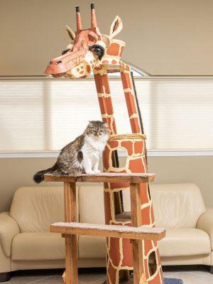sq_paws_giraffe-001.jpg